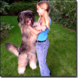 Briard-Artemis with Co-Star Emily