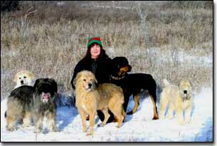 Great Pyrenees-Soloman, Briard-Artemis, Terrier-Jake, Rottweiler-Rex, Wheaton-Lucy and Barbara in a field in winter