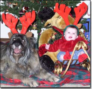 Briard-Artemis and baby with Antlers in front of Christmas tree