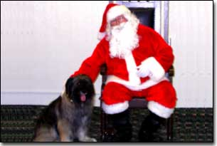 Briard-Artemis with Santa