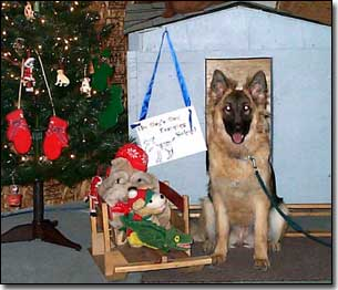 German Shepherd by Christmas tree