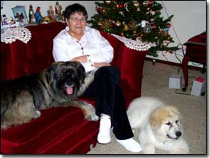 Betty Lloyd with Great Pyrenees-Soloman and Briard-Artemis in front of Christmas tree