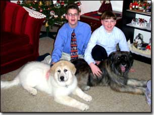 Austin and Christian with Great Pyrenees-Soloman and Briard-Artemis in front of Christmas tree