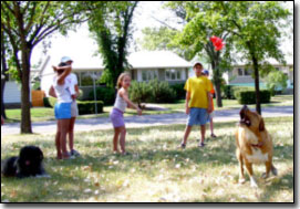 Kids throwing a toy for Labrador-Leon